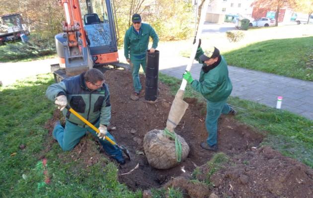 Baumpflanzungen an der Wasserachse