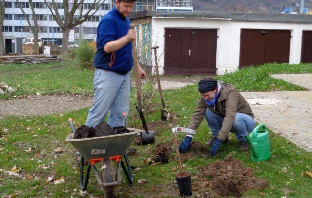 40 neue Heckenpflanzen im Stadtteilgarten