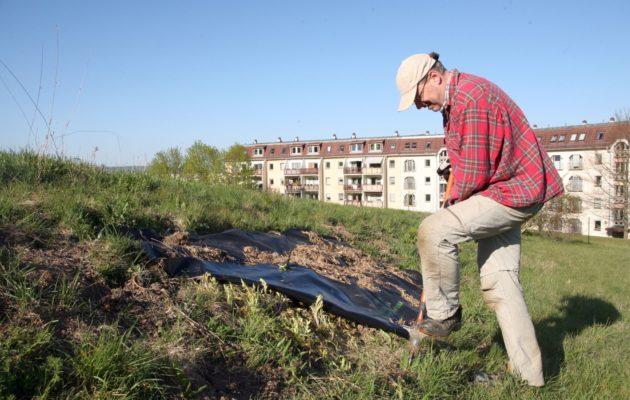 Gunnar Brehm kämpft in Winzerla weiter gegen die Zackenschote